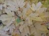 Acer Liquid Jade Plus Testbild: Herbststimmung