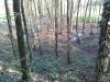 Asus Fonepad 7 Testbild - Wald
