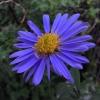 Testbild Asus ZenFone 4: komische Farben, Rauschen