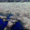 Testbild Asus ZenFone 4: Völlig überzogene Farben