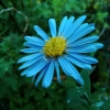Asus ZenFone 5 Testbild: Blume, verfälschte Farben