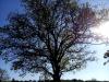 Testbild Avus A34: Selbst im Sonnenschein noch Rauschen