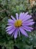 Testbild Avus A34: Blume