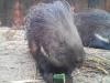 Testbild Avus A57: Stachelschwein