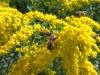 HTC One S: Bienen - solche Aufnahmen sind mit dem One S eher Glückssache