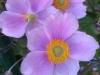 HTC One S: Blumen