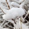 Testbild bq Aquaris E4.5: Schnee