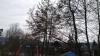Gigaset ME - Bäume.jpg