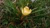 Gigaset ME - Makro Blüte 2.jpg