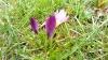 Gigaset ME - Makro Blüte.jpg