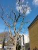 Honor Holly Testbild: Deutliches Rauschen im blauen Himmel
