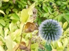 Testbild Huawei Ascend G7: Touch-To-Focus
