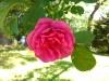 Testbild Huawei Ascend Y530 - Rose