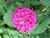 Samsung Galax Grand Duos i9082: Blume - unbearbeitetes Bild