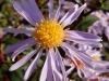 Testbild Alcatel 997D - Macroaufnahme einer Blume