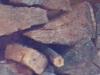 Holz in dämmerigem Licht, Ausschnittsvergrößerung - Alcatel One Touch Idol Ultra