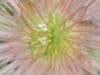 Blüte, Ausschnittsvergrößerung - Alcatel One Touch Idol Ultra