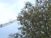 Baum und Kran, Ausschnittsvergrößerung - Huawei Ascend Y300