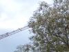 Baum und Kran, Ausschnittsvergrößerung - Mobistel Cynus F3