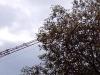 Baum und Kran, Ausschnittsvergrößerung - Alcatel One Touch 992D