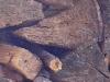 Holz in dämmerigem Licht, Ausschnittsvergrößerung - Alcatel One Touch 992D