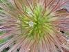 Blüte, Ausschnittsvergrößerung - Alcatel One Touch 992D