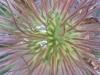 Blüte, Ausschnittsvergrößerung - Huawei Ascend Y300ume