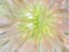 Blüte, Ausschnittsvergrößerung - Mobistel Cynus F3