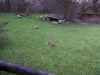Testbild Wiko Barry - Geparden im Gaia Zoo