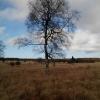 Wiko Birdy 4G Testbild: Hohes Venn