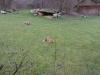 Testbild Wiko Darkmoon - Geparden