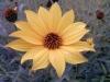 Testbild LG L7 II: Gelbe Blume