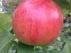 Testbild LG L7 II: Apfel