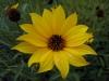 Testbild Wiko Darkside: Gelbe Blume