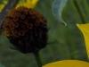 Testbild Wiko Darkside: Gelbe Blume Ausschnitt