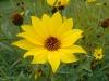 Testbild Avus A24: Gelbe Blume
