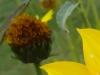 Testbild Avus A24: Gelbe Blume Ausschnitt