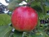 Testbild Wiko Darkside: Apfel