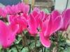Hübsche Blumen mit Unschärfe mit HDR