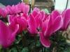 Hübsche Blumen mit Unschärfe ohne HDR