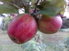 Wiko Slide Testbild: Rote Äpfel