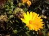 Wiko Stairway - Blume (verkleinert)