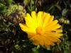 Wiko Darkside - Blume (verkleinert)